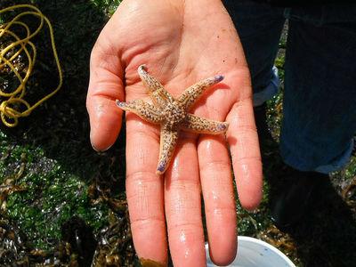 Крупнейшее цунами заставило сотни видов морских существ поменять место жительства