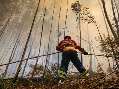 Возросло число жертв лесных пожаров в Испании и Португалии