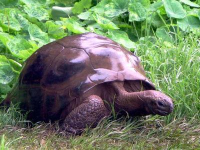 Самый старый в мире самец черепахи оказался геем