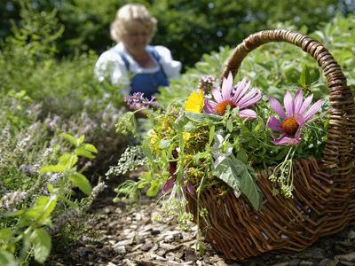Некоторые растительные лекарства могут вызывать рак печени