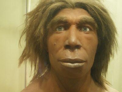 Неандертальцы вернули нашим предкам утраченные гены