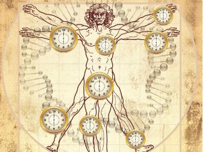 Сонная артерия выдаёт биологический возраст человека