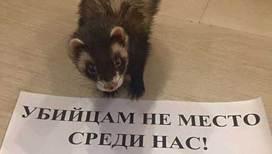 https://cdn-st1.rtr-vesti.ru/p/mw_1323218.jpg