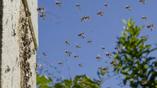 В центре фотографии можно увидеть, как две пчелы столкнулись в воздухе
