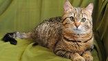 """Кошка Маша приедет на выставку """"Домой""""."""