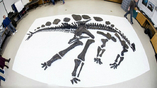 Стегозавр Софи умер 150 миллионов лет назад. 360 её костей были обнаружены в 2003 году
