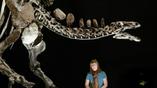 Голова стегозавра была необыкновенно маленькой по сравнению с телом, а мозг вообще был размером с мандарин