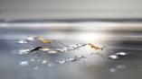 Исследователи наблюдали за водомерками, чтобы создать своих небольших роботов, передвигающихся по поверхности воды