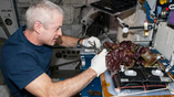 Астронавт выращивает салат на борту МКС