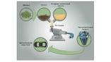 Равные части лигнина и синтетического бутадиен-нитрильного каучука нагревают, смешивают и экструдируют, что в результате даёт превосходный термопластик