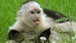 Учёные обнаружили останки древних обезьян в Панаме. Теперь представить выяснить, каким образом приматам удалось достичь Северной Америки