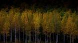 Исследователи использовали лазерные сканеры для изучения биоритмов деревьев.