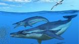 Реконструкция художника: киты на первом плане – Coronodon havensteini, на заднем плане (внизу) – доисторические морские обитатели Echovenator sandersi, а в небе – Pelagornis sandersi, ложнозубые ископаемые птицы с размахом крыльев около 6,5 метров.