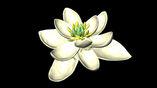 Реконструкция внешнего вида первого цветка Земли.