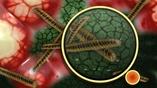 Из всех микроорганизмов, живущих в и на человеке, сегодня изучен лишь 1%.