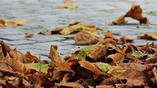 Опадающие листья обретут новую жизнь в виде устройств для хранения энергии.