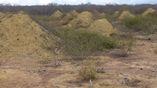 Термитники расположены в каатинге, тропической листопадно-редколесной растительности. Поля курганов, показанные на фото, видны, поскольку они земля была очищена для пастбищ.