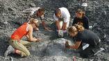 Учёные работают с окаменелыми останками травоядного существа с клювоподобным ртом.
