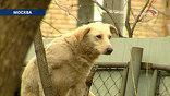 Нападения собак на людей случаются регулярно, несмотря на то, что два года назад городские власти приняли программу стерилизации бездомных животных