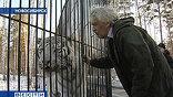 За двух таежных рысей Новосибирский зоопарк выменял у Парижского редкого белого тигра. И это оказалось в 2 раза выгоднее, чем, если бы сибиряки тигра покупали за деньги