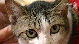 Судьба замурованных кошек на сегодня - главный вопрос, волнующий жильцов дома №110 по Профсоюзной улице