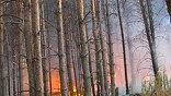 Огромную помощь российским пожарным, спасателям и военным в эти сложные дни оказывают добровольцы