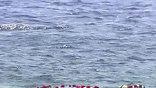 В память о погибших звучит корабельная сирена. На воду спускают живые цветы