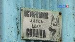 Следственный комитет России взял на контроль дело о нападении бродячих собак на первоклассника в Новочеркасске