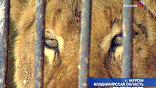 В Муроме замерзают и умирают от голода брошенные на произвол судьбы цирковые животные