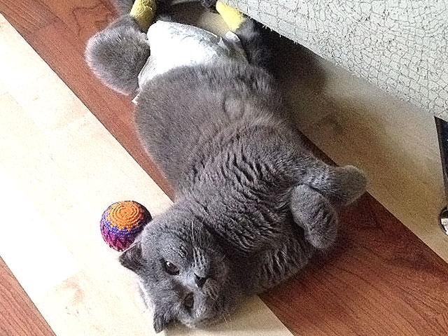Кот додошка