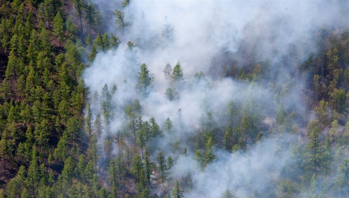 За сутки площадь лесных пожаров в Забайкалье выросла на 8 тысяч га