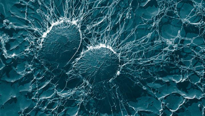 бактерии во льдах