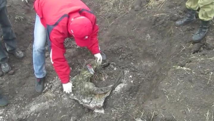 В Луганской области найдено новое захоронение: на телах есть следы пыток