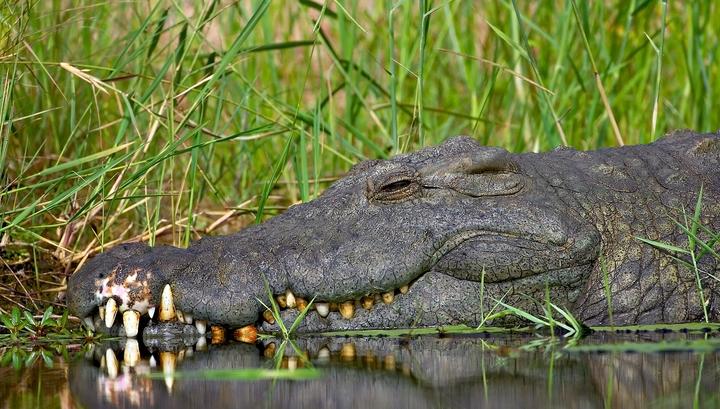 Власти Индонезии хотят построить тюрьму, которую будут охранять крокодилы