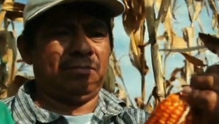 Украину могут превратить в ферму американских ГМО-продуктов