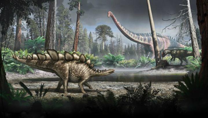 Благодаря шипам на хвосте и костяным пластинам на спине стегозавры оказываются одними из самых узнаваемых динозавров