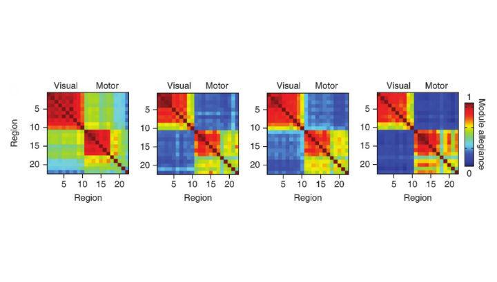 На рисунке показано последовательное повышение автономности работы области мозга, ответственной за движения пальцев (справа) и той, которая обрабатывает визуальную информацию (слева)