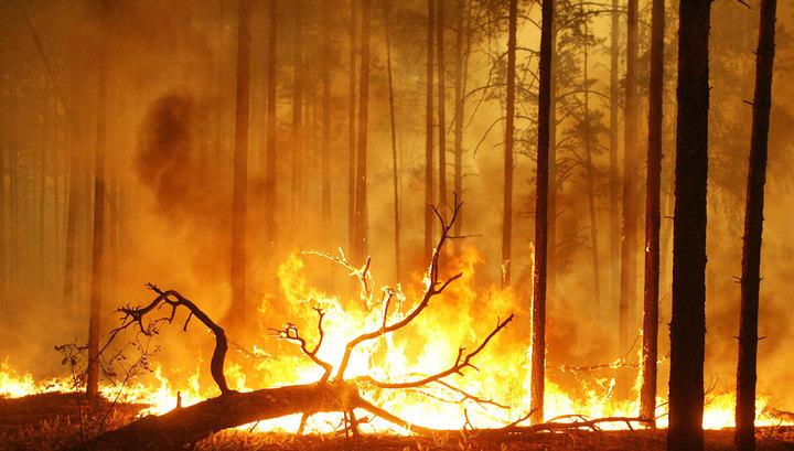 22 тысячи гектаров России охвачены огнем