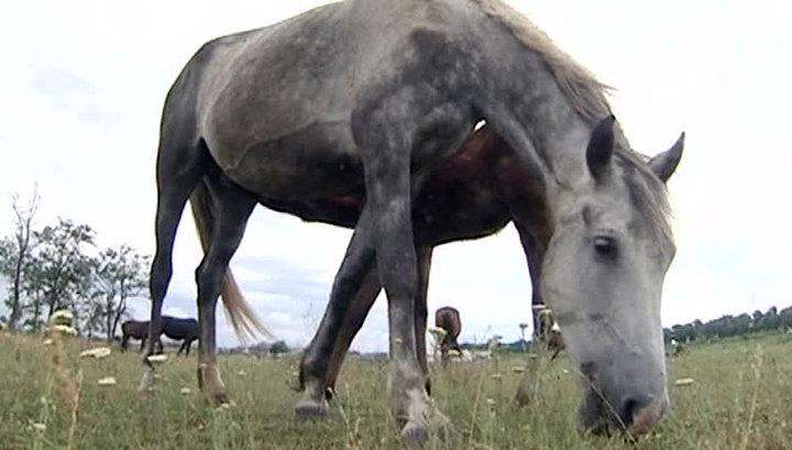В Якутии работникам конного завода полтора года не платили зарплату
