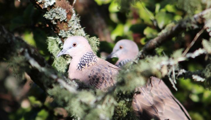 Птичьи кормушки могут способствовать вытеснению птиц коренных видов инвазивными (вторгшимися) видами