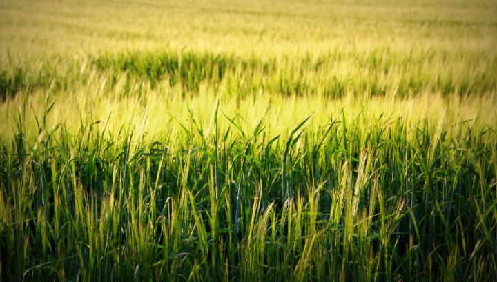 Органические поля способствуют росту разнообразных сорных растений, полезных для многих видов животных