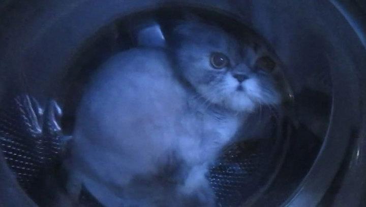 Садистами, постиравшими кота в машине, занялись прокуратура и полиция