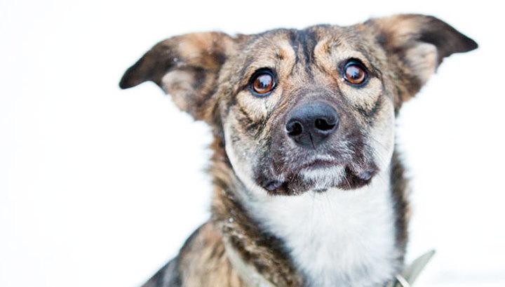 Картинки по запросу Бездомная собака спасла сбитую машиной девушку…