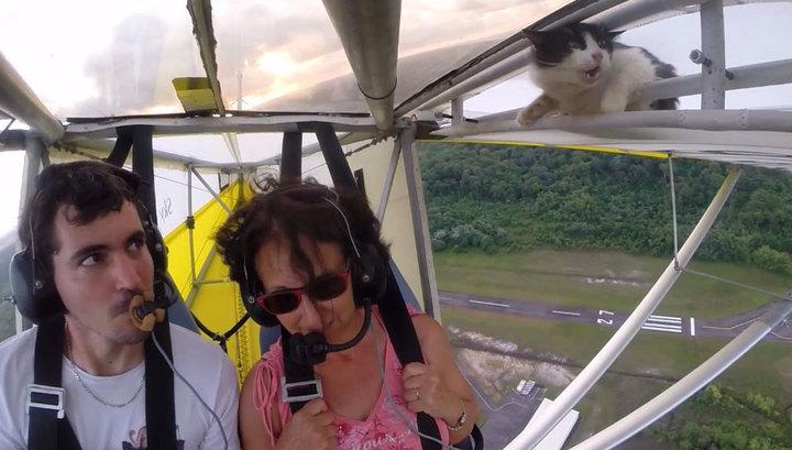 Кот-воздухоплаватель стал звездой YouTube. Видео
