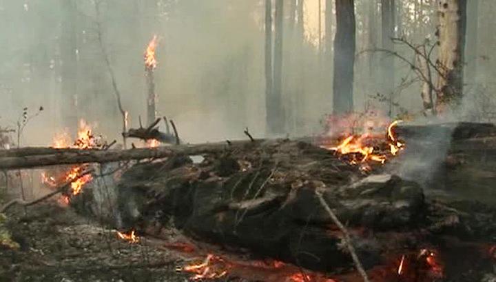 В Бурятии пожарный погиб под упавшим деревом