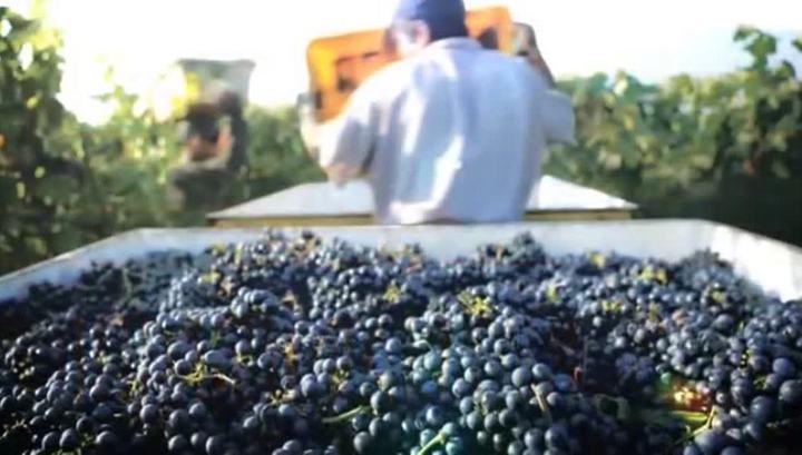 Грузия виноград