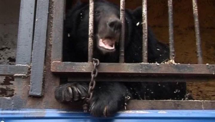 Затопленный зоопарк: в Уссурийске ищут новое место для выживших животных