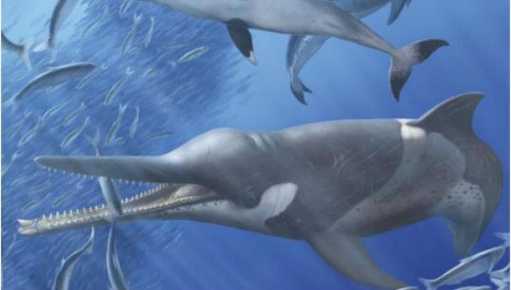 Доисторический клюворыловый кит в представлении художника