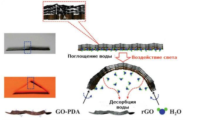 Механизм складывания пластинки на основе оксида графена