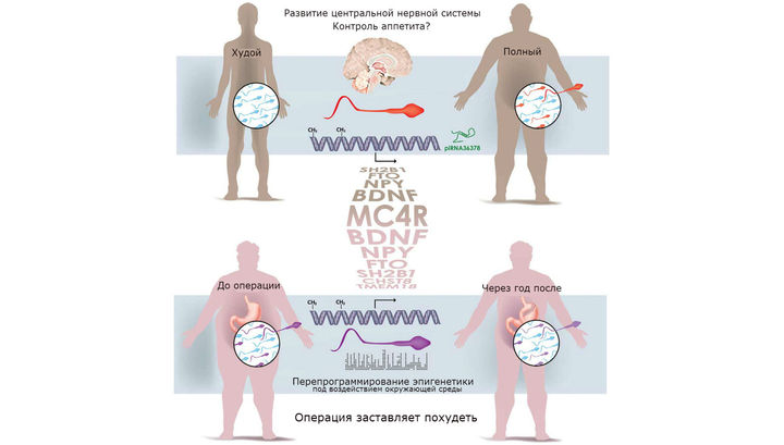 Влияет ли сперма на вес